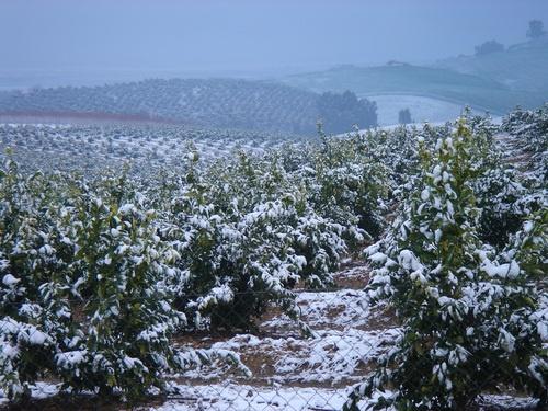 nevada caída en enero de 2010